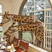 Hard-not-to-SMILE-Giraffe-Manor-Kenya-